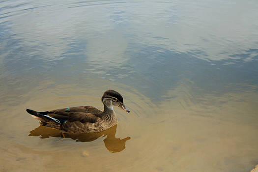 Ducky Two by Barbara Dean