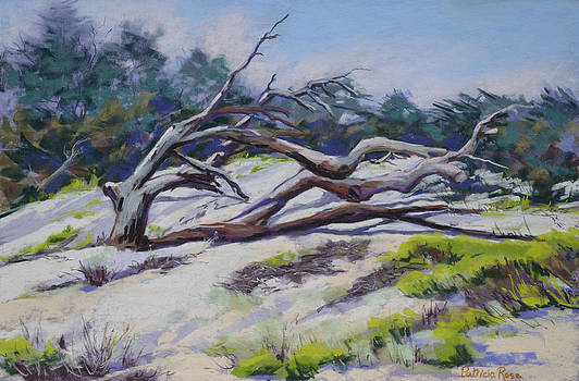 Dune and Old Tree II by Patricia Rose Ford