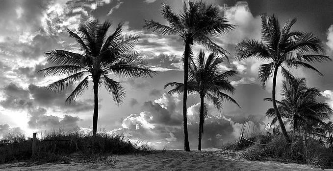 Dune Believer by Andrew Royston