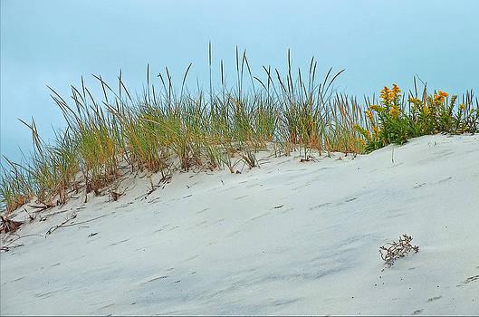 Dune Burst by William Walker