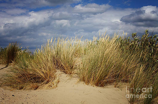 LHJB Photography - dune grass at a cloudy sky
