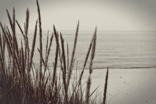 Michelle Calkins - Dune Grass in Early Spring