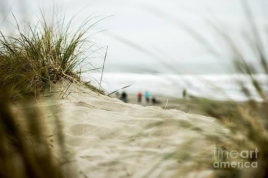 Dune Grass by Tim Tolok