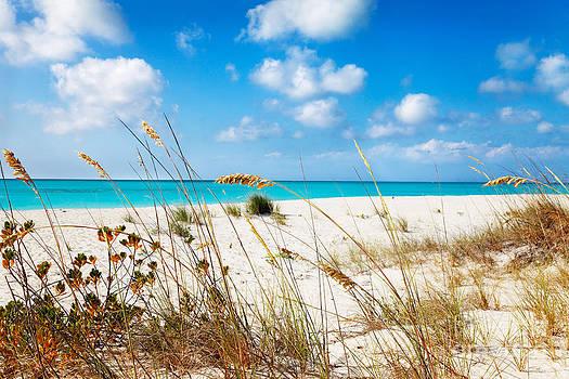 Jo Ann Snover - Dune grasses behind Half Moon Bay