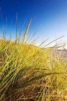 Jo Ann Snover - Dune grasses in sun