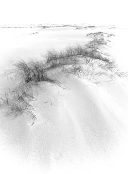 Bill Chambers - Dune in Blowing Wind