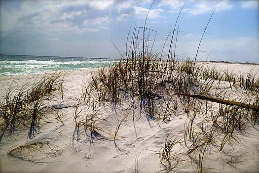 Dune on the Gulf of Mexico by Chance Jobe