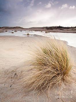 Dune Wetlands Under Winter Sky by David Hanlon