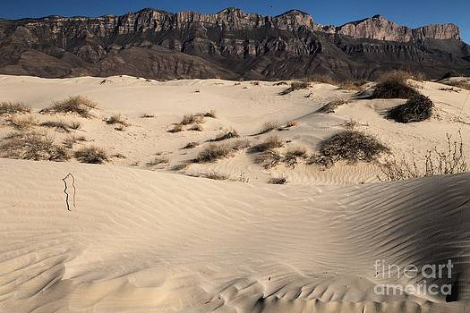 Adam Jewell - Dunes At The Guadalupes
