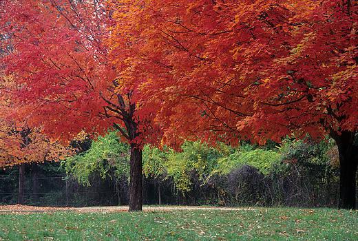Harold E McCray - Durid Park - Baltimore MD