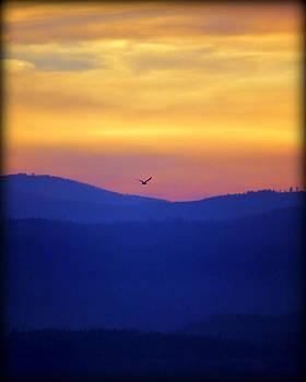 Dusk Flyer by Connie Zarn