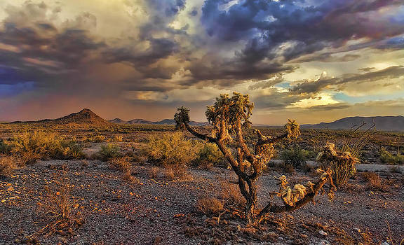 Dust and Cholla by Ryan Seek