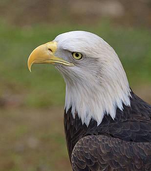 Eagle 7 by Marty Maynard
