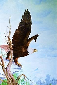 Eagle by Barney Hedrick