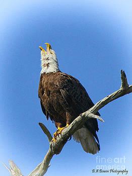 Barbara Bowen - Eagle calling