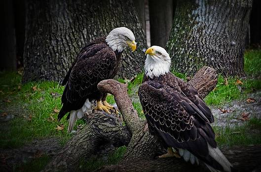Eagle Couple by Cheryl Cencich