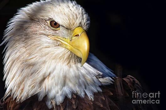 Eagle eye by Andrea Everhard