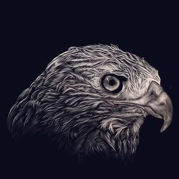 Eagle Eye by Andrew Frey
