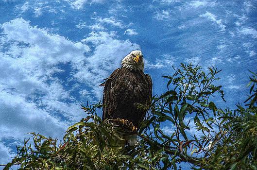 Eagle Eye by Brooke Clark