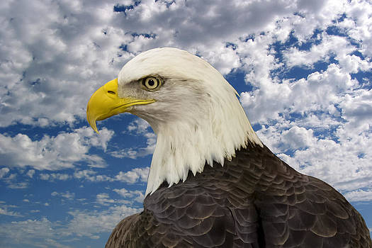 Jack R Perry - Eagle Eye