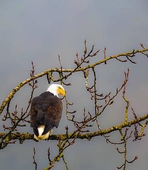 Eagle Eyes by Randy Giesbrecht