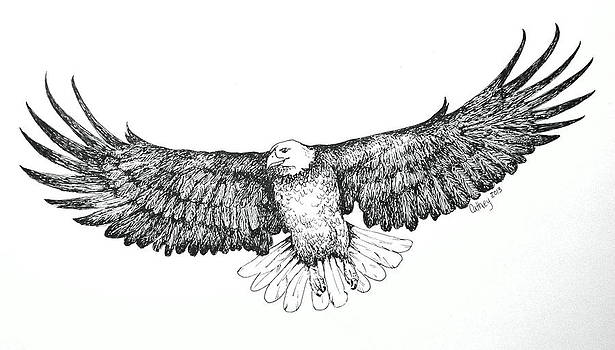 Eagle In Flight by Catherine Howley