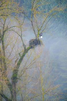 Eagle in the mist by Randy Giesbrecht
