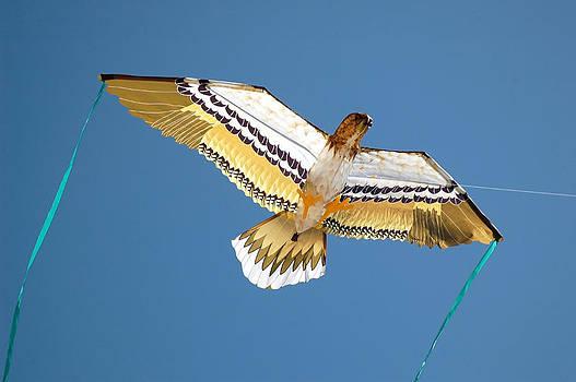 Eagle Kite by Karin Hildebrand Lau