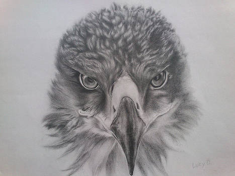 Eagle by Lucy D