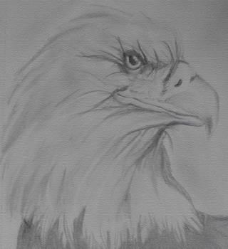 Eagle by Megan Hughes