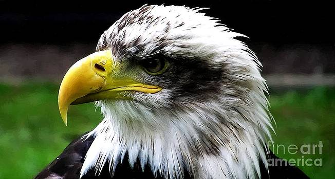Eagle Montana by Larry Stolle