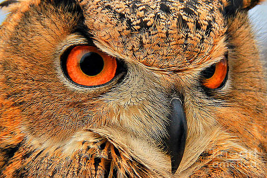 Eagle Owl by Leslie Kirk