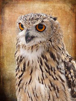 Eagle Owl by Lynn Bolt