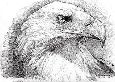 Eagle Portrait by Alban Dizdari