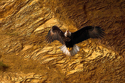 Randall Branham - Eagle Rock Cliff
