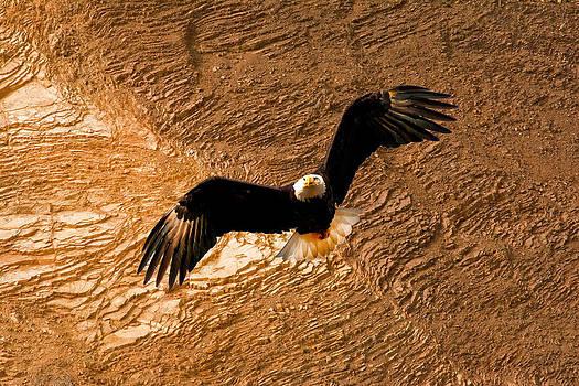 Randall Branham - Eagle Rock