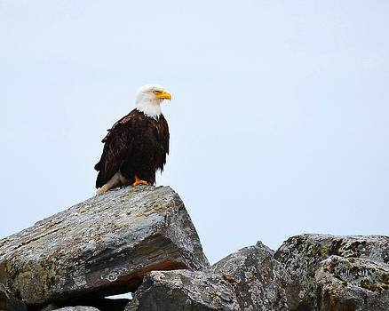 Eagle Rock by Steve Chiarelli