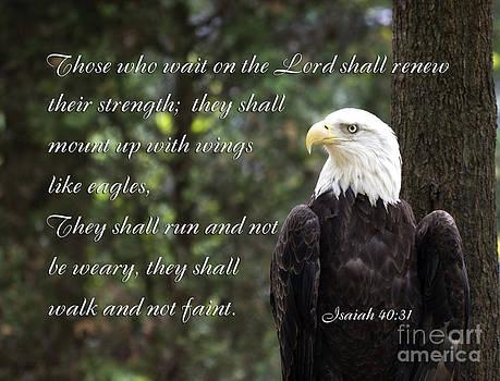 Jill Lang - Eagle Scripture Isaiah