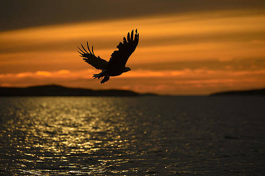 Eagle Silhouette by Andy Astbury