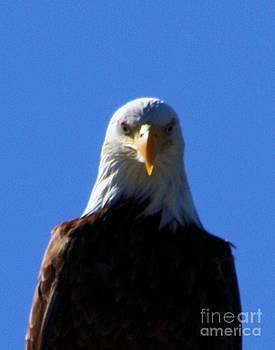 Nick Gustafson - Eagle Stare