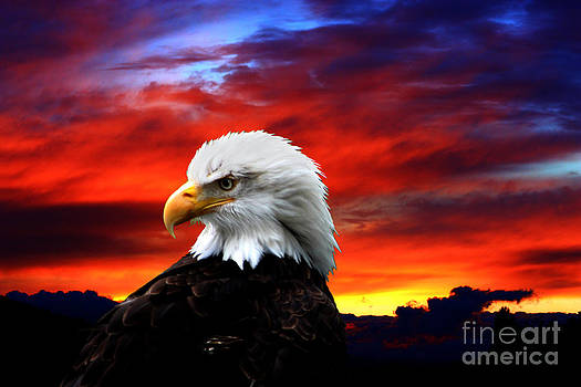 Nick Gustafson - Eagle Sunset