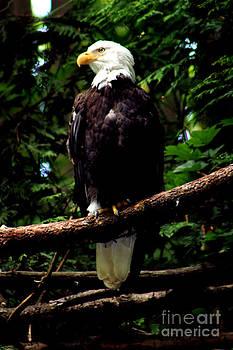 Nick Gustafson - Eagles Perch