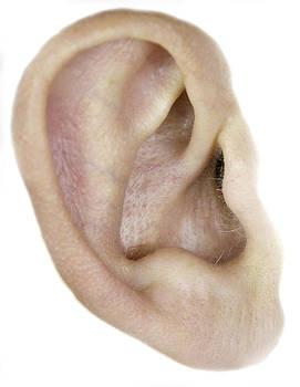 Henrik Petersen - ear