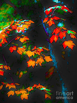 Early Autum by Fred L Gardner