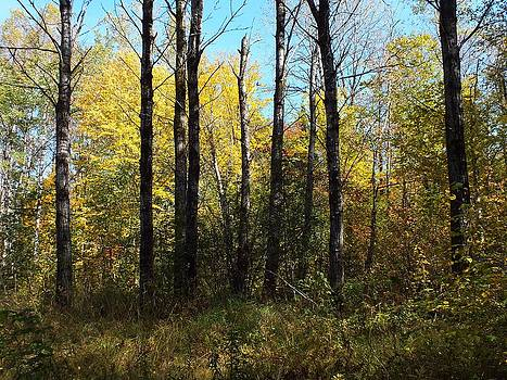Early Autumn Colors 4 by Gene Cyr