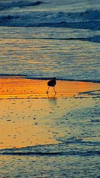 Early Bird by Cindy Croal