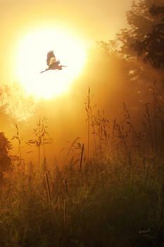 Early Morning Flight by John Robichaud