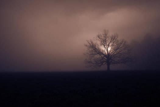 Early Morning Fog by Steve Hucks