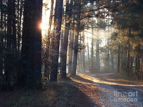 Early morning light in the fall by Cindy Hudson