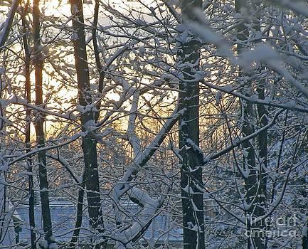 Early Morning Light by Louise Peardon